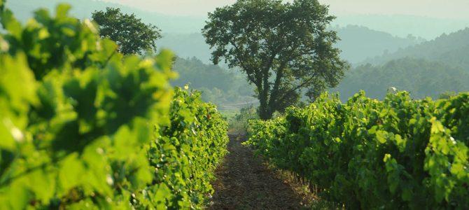 Les vins rouges du domaine de l'Escarelle…