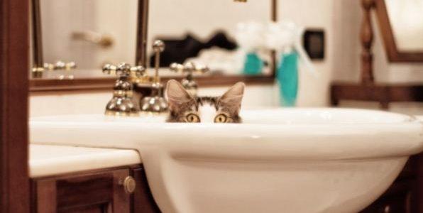 Tout ce qu'il y à savoir sur le chat est à retrouver sur les pages de Catapart.fr