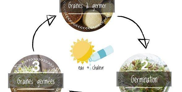 Les graines à germer peuvent-elles m'aider à maigrir ?