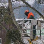 Tout savoir sur l'élagage d'arbre
