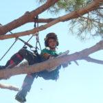 Comment réduire les risques durant les travaux d'élagage?